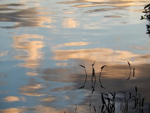 Reflexions on Curran , Lois Gamble