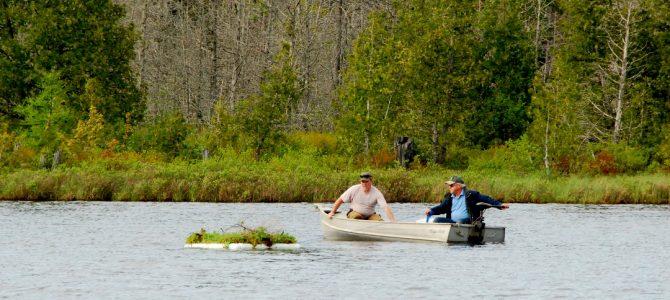 Une plateforme douillette pour le plongeon huard au lac Black.